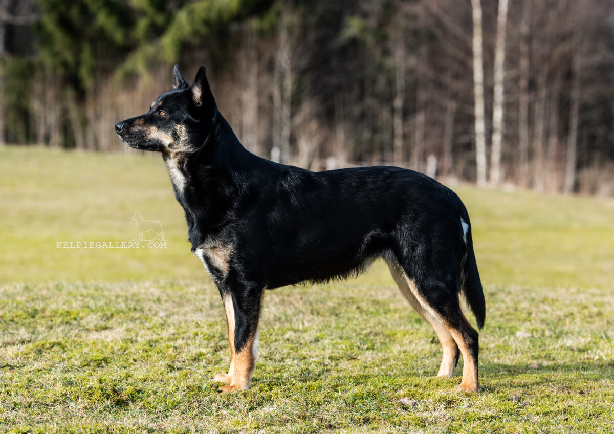 Leagården's Black And Tan Oopsi